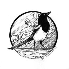 It's #inktober — let's do this! #inktober2016 #magpie