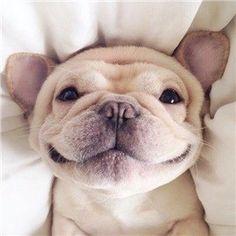 CoolPetZ   Social Pet Network Ödül mamalarına onca para vermenize hiç gerek yok! #köpek #CoolPetZ