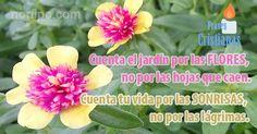 Cuenta el jardín por las flores, no por las hojas que caen. Cuenta tu vida por las sonrisas, no por las lágrimas
