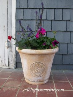 1000 images about geraniums on pinterest geranium care pots and red geraniums - Growing petunias pots balconies porches ...