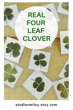 Real 4 Four Leaf Clover Lucky Charm Nature Lover Gift Good Luck Shamrock Pressed And Preserved Grown Wild In Ontario Canada