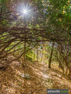 Hike the Appalachian Trail through dense tunnels of rhododendron near the Standing Indian Mountain summit in North Carolina