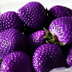 Purple strawberries