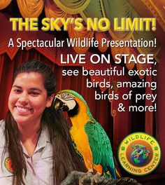 See exotic birds live on stage from the Wildlife Learning Center during Disney's Planes, showing at The El Capitan Theatre Aug 8 to Sep 18! — at The El Capitan Theatre.
