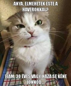 LOLcats is the best place to find and submit funny cat memes and other silly cat materials to share with the world. We find the funny cats that make you LOL so that you don't have to. Funny Cat Memes, R Memes, Funny Facts, Funny Sarcasm, Grumpy Cat Christmas, Christian Jokes, Clean Jokes, Silly Cats, Cat Boarding