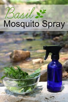 How to make an herbal spray to keep mosquitos away! Just basil, water and vodka. Basil essential oil can be added, too, if you have it on hand.