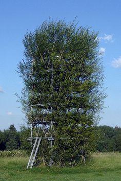 (Quelle: Ferdinand Ludwig, (c) Ferdinand Ludwig / Universität Stuttgart) Viking Wedding, Tree Shapes, Ludwig, Ferdinand, Pavilion, Vermont, Tower, Outdoor Structures, Plants