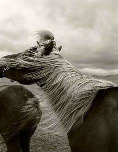 windblown horse mane