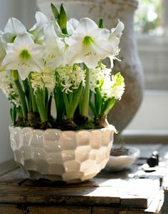 White hippeastrums and hyacinths. Hippeastrums available for purchase in Australia from Garden Express in September
