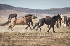 Biting Wild Horse, Horse Photography, Rob's Wildlife, Gifts for Horse Lovers, Horse Wall Art Home Decor
