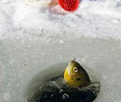 Google Image Result for http://lh6.ggpht.com/_gDDgXn7fh-o/S0NnNOGqFEI/AAAAAAAADrw/a9Izmtb9Gn8/Ice%2520Fishing.jpg