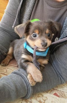 15 pictures of puppies really too cute - Valerie Torre - Cute animals - Chien Cute Little Animals, Cute Funny Animals, Funny Dogs, Funniest Animals, Cute Pets, Cute Animal Pictures, Puppy Pictures, Dog Photos, Cute Dogs And Puppies