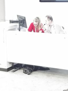 My lecturer's guide dog got tired and had a lie-down https://i.redd.it/5vsjlg98bzf01.jpg