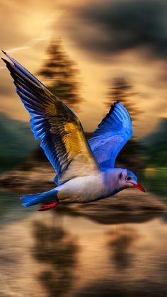 Blue bird, blur, flight, 720x1280 wallpaper
