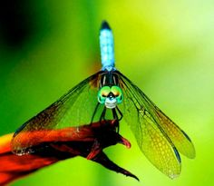 Dragonfly by Nichole Neill Photography