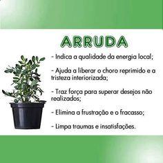 Arruda Plant Health, Witch House, Medicinal Herbs, Wicca, Feng Shui, Vegetable Garden, Health Tips, Herbalism, Medicine