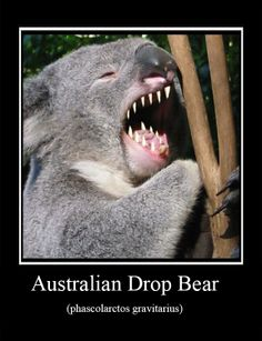 evil koala meme - Google Search | Funny stuff | Drop bear ...