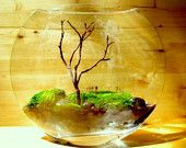 Love terrariums, but i nose and finger prints all over them!lol