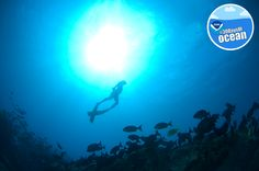 Happy World Ocean Day! Watch our video and test your knowledge about our ocean. #30DaysofOcean