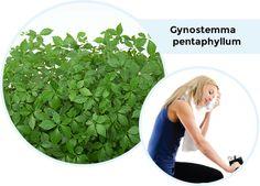 GYNOSTEMMA PENTAPHYLLUM Weight Loss, Plants, Plant, Weigh Loss, Loosing Weight, Planting, Planets, Loose Weight, Losing Weight