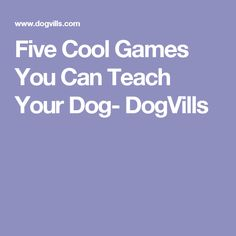 Five Cool Games You Can Teach Your Dog- DogVills