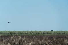 Okeechobee Agriculture by mikealbeland