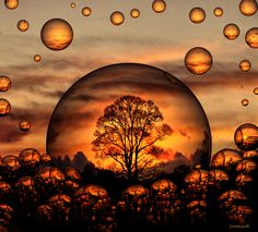 A vision I had. this is so very close to what I saw! The spheres are our souls, who we truly are, what we become when we transition on. There is a field so beautiful with a golden tree. Can you feel the peace? The tranquility that this Image creates? Amazing Photography, Art Photography, Surrealism Photography, Photoshop Photography, Ryan Guzman, Blowing Bubbles, Water Droplets, Les Oeuvres, Mother Nature