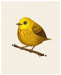 Mike Mitchell - Yellow Warbler http://www.sirmitchell.com/