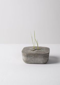 This makes me think grass can grow anywhere. What an amazing piece of concrete. :