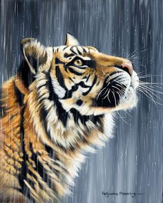 Tiger Wild Or Caged on
