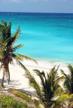 Abundance of peaceful paradise Palm Tree Pictures, Palm Trees Beach, Palmiers, Island Beach, Blue Lagoon, Beautiful Beaches, Seaside, Paradise, Explore