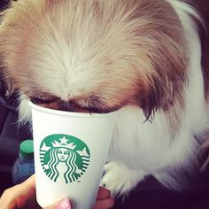 Fido's Freebie: Don't forget, your furry pal gets his own freebie, too. Order a puppy latte or puppycino, and your best friend will get a sample cup full of whipped cream. Want to save even more at your favorite stores? Here's how to save money in Target and shopping online at Amazon. Source: Instagram user jessmorgan9