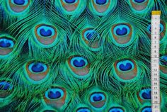Picture of Peacock tail feathers forming a pattern filling the frame stock photo, images and stock photography. Peacock Tail, Peacock Bird, Peacock Feathers, Peacock Quilling, Peacock Purse, Green Peacock, Feather Wall Decor, Peacock Colors, Peacock Design
