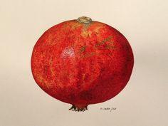 Pomegranate 1. Melograno 1.