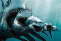 El megalodón | Gigantes prehistóricos