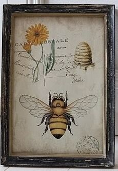 ≗ The Bee's Reverie ≗ Antique Bee Print I Love Bees, Birds And The Bees, Vintage Prints, Vintage Bee, Vintage Country, Vintage Frames, Decoupage, Buzz Bee, Stoff Design