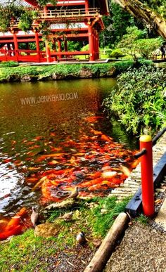 Feed the koi at Valley of the Temples