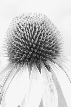 blanc | white | bianco | 白 | belyj | gwyn | color | texture | form |