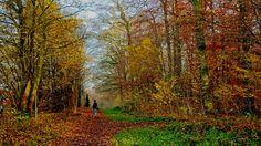 Frische Luft für Mensch und Tier,  ...  dazu noch bunte Wälder, das Leben ist ganz schön jetzt hier, es wird auch gar nicht kälter.  :-)