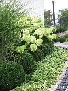 Ogród wśród pól i wiatrów - strona 381. - Forum ogrodnicze - Ogrodowisko
