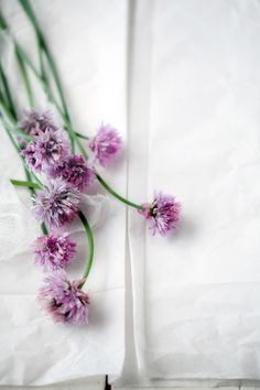 Chive blossoms.  Beautiful blog post by Aran Goyoaga of Cannelle et Vanille.