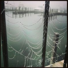 Cool spider web at the marina