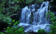 Buy Custom natural scenery wallpaperFloresta