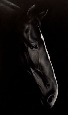 Ideas Painting Black And White Face Beautiful Horses All The Pretty Horses, Beautiful Horses, Animals Beautiful, Cute Animals, Black Animals, Black Horses, Wild Horses, Clysdale Horses, Mustang Horses
