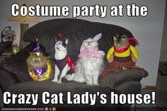 costume party at the crazy cat lady's house!
