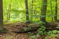 Wandelroute Schelpen onder je schoen voor een gezellig dagje uit. (http://www.route.nl/wandelroute/307695/schelpen-onder-je-schoen)