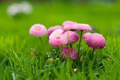 Wiosennie i różowo... | digart | digart.pl
