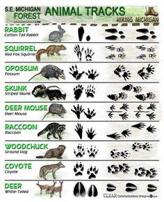 Latest ANIMAL TRACKS ID sheets   HIKING MICHIGAN