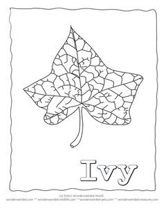 Leaf Coloring Page Ivy At Wonderweirded Wildlife Pree Printable PAge And
