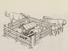 Here is a nice pen or fence design for having a safe place for foals to eat without having the big horse come in and eat all the food. This is called a creep feeder. Horseback Riding Tips, Horse Riding Tips, Horse Horse, Diy Horse Blankets, Feeder Cattle, Hay Feeder For Horses, Horse Pens, Raising Cattle, Horse Care Tips